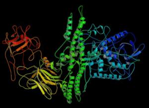 Kristallstruktur Botulinumtoxin Typ A